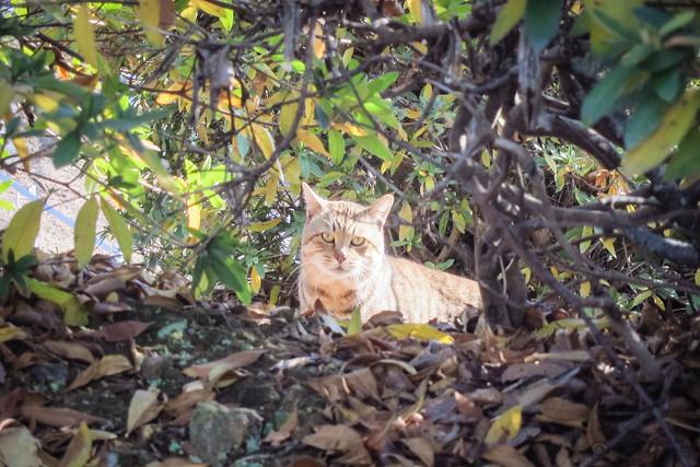 Today's Cat@2013-01-15