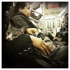 IMG_7450 (john fullard) Tags: city nyc urban newyork train cat underground subway carriage metro passengers mta commuters iphone thecatwhoturnedonandoff hipstamatic libatique73