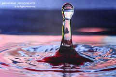 DROPS.............. (Henrique J. Marques Nascimento) Tags: gua drops nikon sigma drop gotas gota supermacro henrique sigma105 sigma105mm smacro nikond90 henriquenascimento