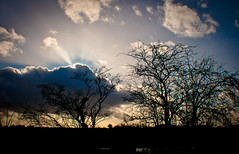 The suns behind. (Holly Norval) Tags: trees canon leicestershire lensflare eos400d
