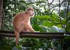Singapore Zoo-216 (Jon Durman) Tags: animals zoo nikon wildlife april 2012 singaporezoo nikond700 nikon28300mm