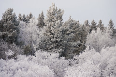 Cold (DavidAndersson) Tags: morning trees winter white snow cold ice water is frost sweden covered sn vnersborg tamron18200f3563