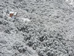 Winter Forest Cabin (Dackel828) Tags: winter snow forest cabin national wilderness hillside sierranevada sequoia sequoianationalforest oakwoodlands