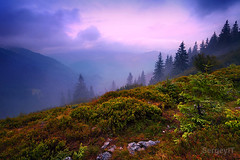 misty mountain sunset (SergeyIT) Tags: sunset sky mist mountain color nature grass silhouette pine clouds rural forest sunrise landscape outdoors evening photo haze woods colorful heaven photographer view image horizon foggy meadow violet scene ukraine valley land carpathians