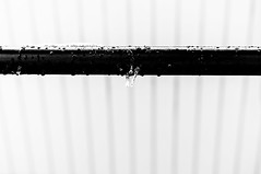Happy (Icicle) Fence Friday (dennisdasfoto) Tags: schnee winter blackandwhite bw snow lines fence blackwhite drops vinter icicle zaun sn minimalistic tropfen eiszapfen hff staket droppar svartvitt schwarzweis minimalistisch istapp minimalistisk dt50mmf18sam fencefriday happyfencefriday