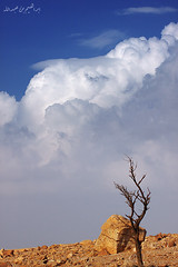 (© ibrahim) Tags: sky nature rain clouds canon landscape photography eos desert image drought شمس ibrahim abdullah عبدالله ابراهيم تصوير مطر المطر صحراء 50d طبيعه الغيوم كانون التميمي canon50d الابل شعيب altamimi جفاف سدير alyahya المذنب مزون البرق الوسم لاندسكيب اليحيى مزن المجمعه نصوب حياهـ سدى