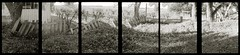 Good fences make good neighbors (efo) Tags: bw fences olympus halfframe incamera pend2 penorama hexaptych