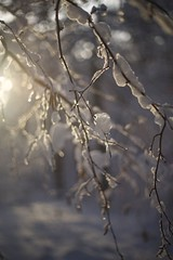 Winter wonderland (akarakoc) Tags: schnee winter light sunset sun snow tree nature water canon 50mm lights schweiz evening abend drops ast sonnenuntergang forrest bokeh swiss land 5d melt recreation f18 wonderland sonne ef lichter hintergrund mark3 canonphotography photographyfor 5dmarkiii mygearandme mygearandmepremium 5dmark3 rememberthatmomentlevel4 rememberthatmomentlevel1 rememberthatmomentlevel2 rememberthatmomentlevel3 rememberthatmomentlevel5 uploaded:by=flickrmobile flickriosapp:filter=nofilter