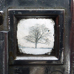 sycamore through the viewfinder (pho-Tony) Tags: park camera old uk trees winter sky snow tree english 1948 120 6x6 film vintage square is box branches sheffield norton 66 graves f45 waist 1940s sycamore level 1950s lone bleak british medium format lonely veteran 90mm finder bellows folder croydon agi folding collector viewfinder 145 ttv 9cm agilux agifold anastigmat 6cm photosofcameras throughtheviewfinder waistlevelfinder 6cmx6cm