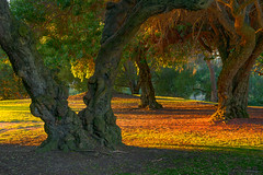 Evening in the Park (mojo2u) Tags: california park trees sandiego balboapark eveninglight nikon2470mm nikond800
