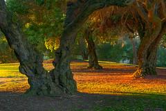 Evening in the Park (mojo2u) Tags: california park trees sandiego balboapark eveninglight nikon2470mm nikond800