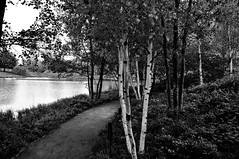 Chicago Botanic Gardens (kevin lyles | photography) Tags: park blackandwhite bw chicago beach blackwhite trails trail birch chicagobotanicgardens windycity thewindycity chicagobeaches kevinlyles httpkevinlylestumblrcom beachesandparks httpwwwflickrcomphotoskevinlylesphotographysets httpsplusgooglecomphotoskevinlylesalbums httpswwwflickrcomphotoskevinlylesphotographysets