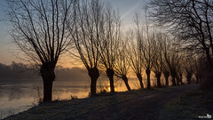 Willows (BraCom (Bram)) Tags: trees winter sun mist holland reflection ice grass fog sunrise canon bomen frost mood path widescreen pad nederland thenetherlands silhouettes gras 169 zon willows stellendam ijs zuidholland goereeoverflakkee zuiderdiep wilgen vorst sfeer spiegeling southholland zonsopkomst silhouetten canonef24105mmf4lisusm vp7 bracom canoneos5dmkiii vigilantphotographersunite vpu2 vpu3 vpu4 vpu5 vpu6 vpu7 vpu8 vpu9 vpu10 bramvanbroekhoven