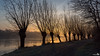Willows (BraCom (Bram)) Tags: trees winter sun mist holland reflection ice grass fog sunrise canon bomen frost mood path widescreen pad nederland thenetherlands silhouettes gras 169 zon willows stellendam ijs zuidholland goereeoverflakkee zuiderdiep wilgen vorst sfeer spiegeling southholland zonsopkomst silhouetten canonef24105mmf4lisusm vp7 bracom canoneos5dmkiii vigilantphotographersunite vpu2 vpu3 vpu4 vpu5 vpu6 vpu7 vpu8 vpu9 vpu10 bramvanbroekhoven