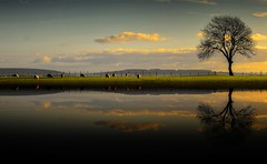 Sheep (Eric Goncalves) Tags: reflection tree fence river evening sheep gloucestershire severn array nikond7000 ericgoncalves rememberthatmomentlevel1 rememberthatmomentlevel2 rememberthatmomentlevel3 besteverdigitalphotography