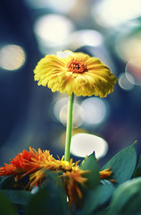 Hana (Zagros.os) Tags: flower macro yellow canon 50mm 18