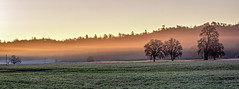 Sunrise, Highway 198 (tanngrisnir3) Tags: california trees mist tree fog sunrise landscape dawn highway wideangle oaks 198 priestvalley treesubject landscapedreams treesdiestandingup olympus45mm