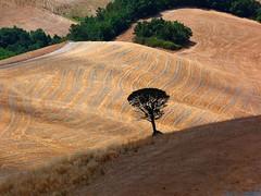 ombre et lumire (Ol.v!er [H2vPk]) Tags: tree landscape italia volterra chianti toscana toscane arbre volturi