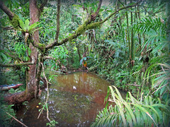 The Rain Forest (April.Moulton) Tags: travel trees fern tree green nature water pool leaves forest canon leaf moss pond rainforest branch branches bamboo foliage palmtrees palmtree twig pointandshoot ferns nationalgeographic canonpowershot micronesia compactcamera oceania pohnpei candidphotography travelphotography canons100 canonphotography federatedstatesofmicronesia pointandshootcamera canonpowershots100 canon7d aprilmoulton
