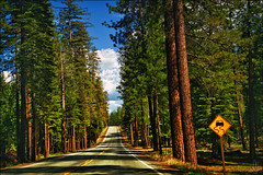 The Road to Happiness. (i ea sars) Tags: california road park street travel trees light summer sky usa naturaleza sun lake sol nature sunshine sign northerncalifornia june les clouds america forest landscape drive golden us highway scenery driving arboles shadows natur dramatic sunny roadtrip adventure nationalforest mount arbres national bosque trinity cielo yosemite nubes verano shasta canon5d interstate redwoods norcal mammothlakes hwy395 mountshasta mtshasta wald sequoia 2470l fort goldenhour 395 interstate5 us395 highway395 2470mm   hayfork mraky slunce canoneos5d obloha  shastatrinity
