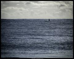 The Paddler (Konaflyer) Tags: ocean sea man art water hawaii nikon board paddle surfboard kailua paddler paddleboard d7000 markpatton