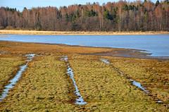 Lammassaari (fede_gen88) Tags: trees sea nature water suomi finland helsinki woods nikon europe baltic lammassaari d5100
