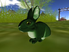If at first you do not succeed! (Faolain Oconnell) Tags: bunny bunnies secondlife clover ozimals breedables velveteenforest