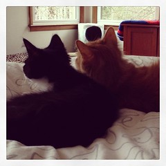 upload (merrickball) Tags: valencia cat square kitten squareformat finnegan stinks iphoneography instagramapp uploaded:by=instagram foursquare:venue=50f985e8e4b0e1894c0e5653