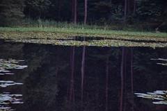DSC_0121web (pedrop61) Tags: country mountains nature walking trekking roman valledaosta canavese boschi wood lake animali