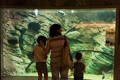 Acuario Agosto 2016 (70) (Fernando Soguero) Tags: acuario zaragoza acuariodezaragoza aragn turismo aquarium nikon d5000 fsoguero fernandosoguero