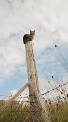Pole Cat (The Unexplored) Tags: scottish hebridean manx wild cat scotland isleoflewis westernisles outerhebrides stumpy pussy shot nikon nikkor 1685mm lightroom photoshop grimgit thegrimgit unexplored theunexplored