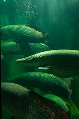 Acuario Agosto 2016 (65) (Fernando Soguero) Tags: acuario zaragoza acuariodezaragoza aragn turismo aquarium nikon d5000 fsoguero fernandosoguero