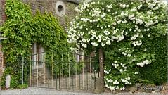 Bolland (Herve) (hanquet jeanluc) Tags: 2016 ancienneferme bolland maison pierres vieillesmaisons village villagedebolland qdub liege belgium be