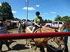 8/6/16 - Beckwith Orchards: Me (mavra_chang) Tags: 9thannualkentlionssweetcornfestival kentlionssweetcornfestival animals ponies me equines horses domestichorses