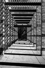 """Walk this Way"" (Week 8/52) (milmonfharrison) Tags: collonade 50mmf18 uc davis ucd alleys"