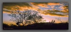 PR  DO  SOL  NO  SERTO  III. (manxelalvarez) Tags: prdosolnoserto solpor puestadesol nubes cielos paisajes bahia brasil silhouettes