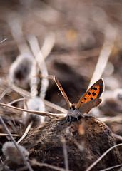 A beauty on the rock (Beatriz-c) Tags: butterfly mariposa orange naranja summer verano macro insect insecto natura naturaleza sunlight luz sol