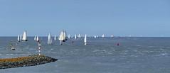 Von Harlingen nach Terschelling  und zurck (antje whv) Tags: harlingen nordsee northsea segelboote sailingboats holland