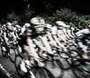 Tour of Britain in Flintshire (Alistair-Hamilton) Tags: race stage4 a541 flintshire tourofbritain cycling