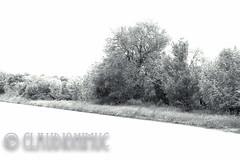 Spoon River Anthology Elizabeth Childers (claudionimuc) Tags: spoonriver edgarleemasters america selenio seppia crema poesia morti fernandapivano pivano antologia de andre pavesi 2016 art rural