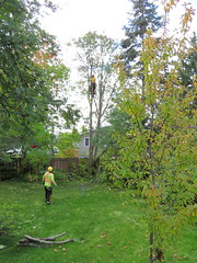 16Sep26 050pe (diffuse) Tags: arborist cutting logging treeremoval backyard climbing safety harness rope chainsaw