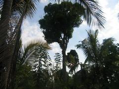 KALASI Temple photos clicked by Chinmaya M.Rao (84)
