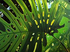 TAHojaGrande (rmm02138) Tags: hoja leave tropical selva acrilico acrylic