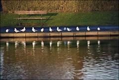 Birds at  sunset (saleem shahid) Tags: