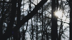 Frost (Maike Born) Tags: pictures cold film forest movie born moving frost maike