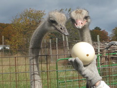 Double K-W Ostrich Farm