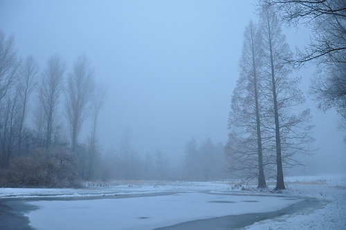 Misty Winter Pond