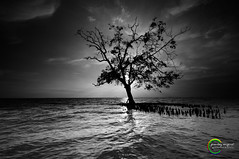 ::BRAVE: (Green.Boy) Tags: shadow blackandwhite seascape tree monochrome nikon sigma malaysia handheld highlight greenboy leefilter pantaikelanang picturecontrol