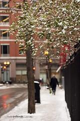 029.365 | winter walk to work (sidemtess | linda) Tags: snow man leaves boston 50mm raw candid massachusetts streetscene 365 manual 50mmf14 onmywaytowork 60d project36529 029365 sidemtess shutterssisters365 snowonthestillgreenleaves averygrayday