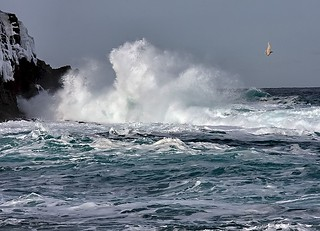 Middle Cove Waves